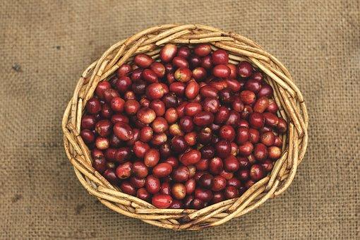レッドハニープロセスによるコーヒー生豆の精製処理方法について【熊本珈琲研究所わたる】