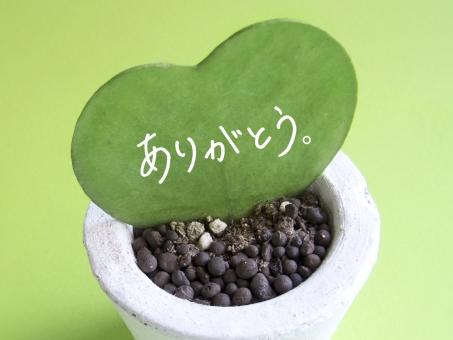 快気祝いのプレゼントで喜ばれるコーヒーギフトとは【熊本珈琲研究所わたる】