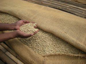 エチオピア グジ コーヒー